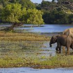 A mother and baby elephant in a lagoon in yala national park sri lanka - shutterstock_65580787